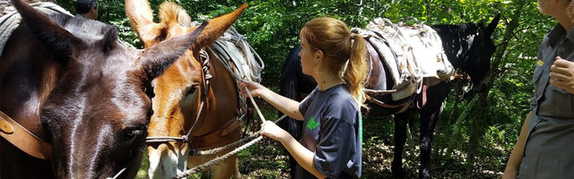 Individual Placement working with horses